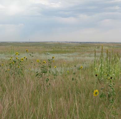 prairie late summer